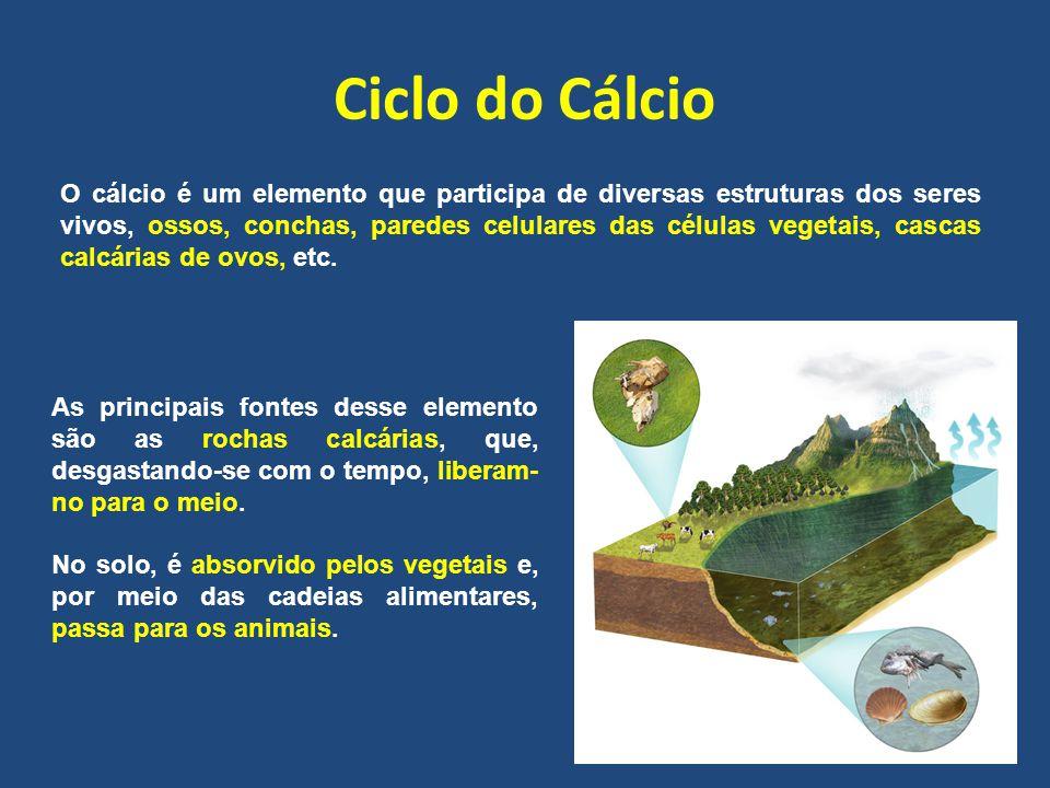 Ciclo do Cálcio O cálcio é um elemento que participa de diversas estruturas dos seres vivos, ossos, conchas, paredes celulares das células vegetais, cascas calcárias de ovos, etc.