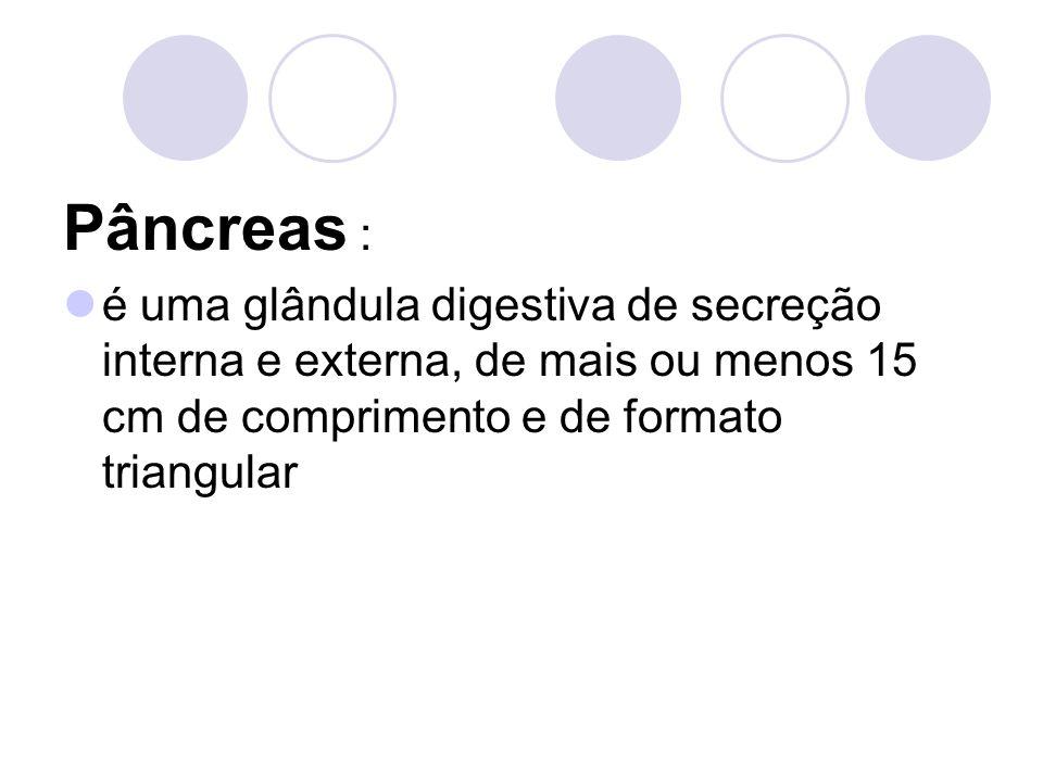 Pâncreas : é uma glândula digestiva de secreção interna e externa, de mais ou menos 15 cm de comprimento e de formato triangular