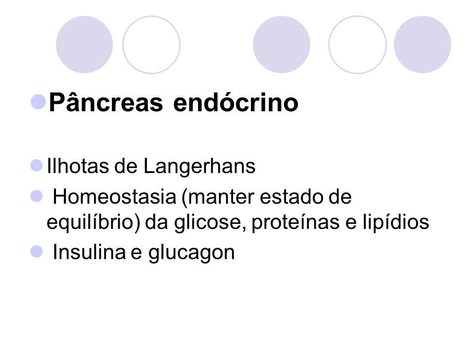 Pâncreas endócrino Ilhotas de Langerhans Homeostasia (manter estado de equilíbrio) da glicose, proteínas e lipídios Insulina e glucagon
