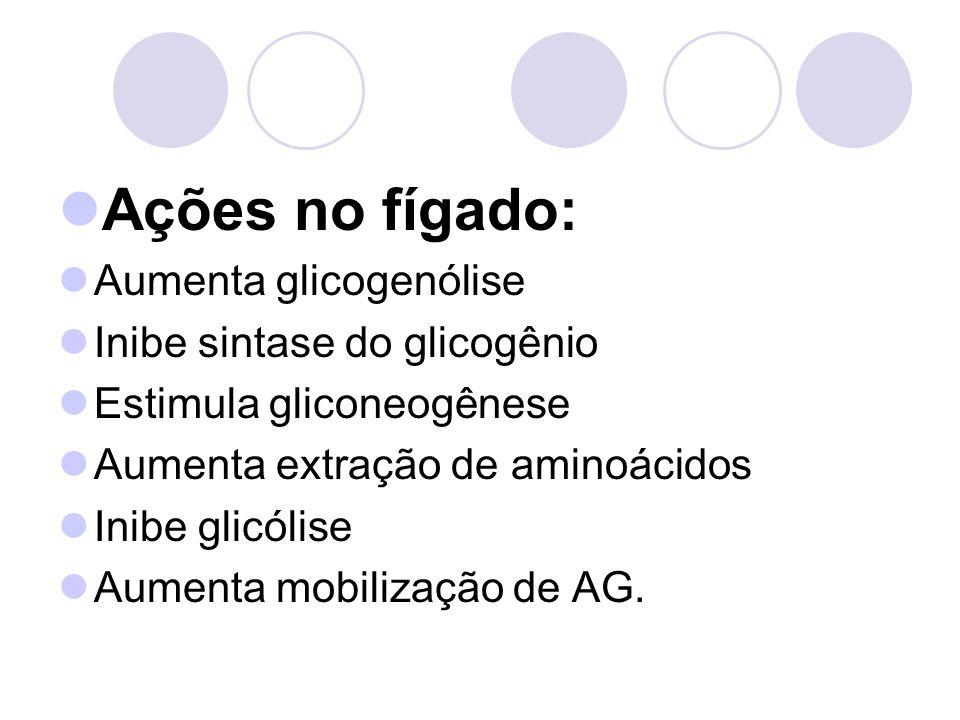 Ações no fígado: Aumenta glicogenólise Inibe sintase do glicogênio Estimula gliconeogênese Aumenta extração de aminoácidos Inibe glicólise Aumenta mobilização de AG.