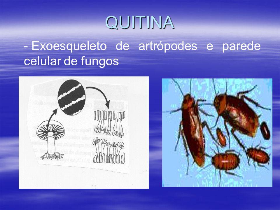 QUITINA - Exoesqueleto de artrópodes e parede celular de fungos