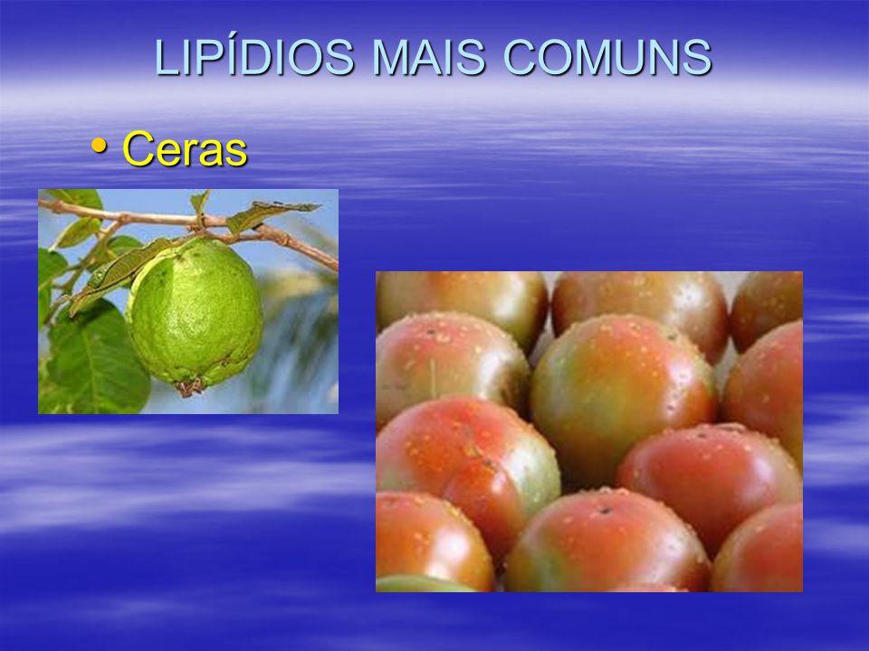 LIPÍDIOS MAIS COMUNS Ceras Ceras
