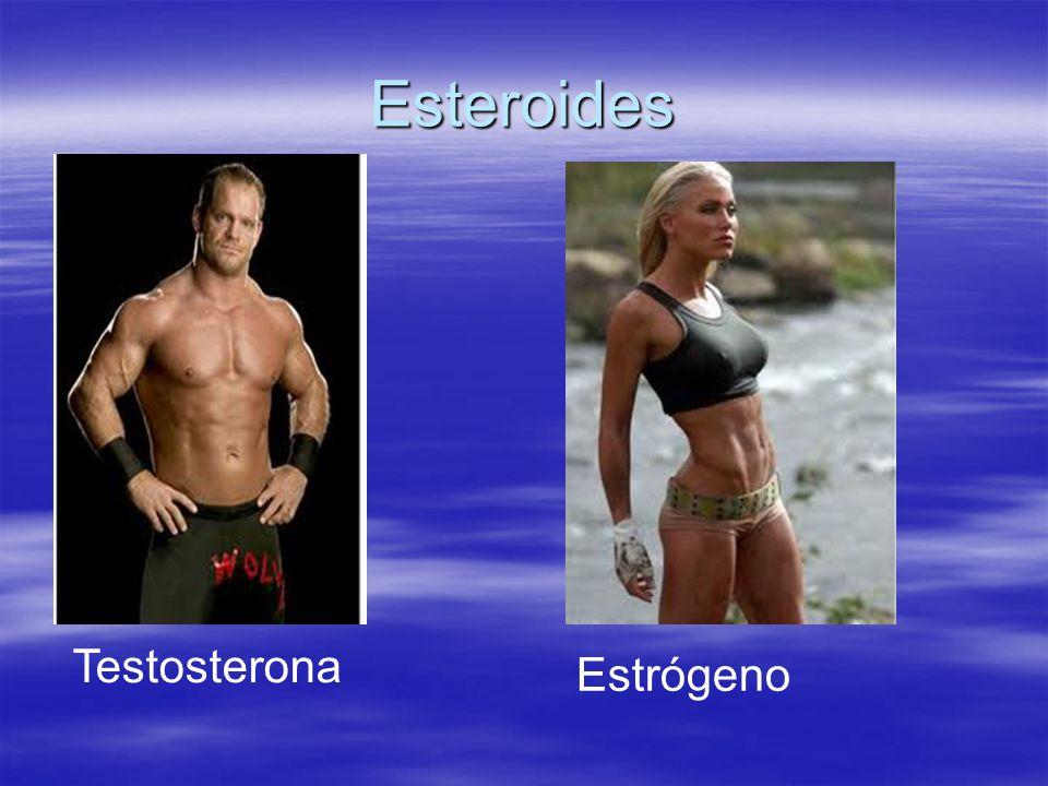 Esteroides Testosterona Estrógeno