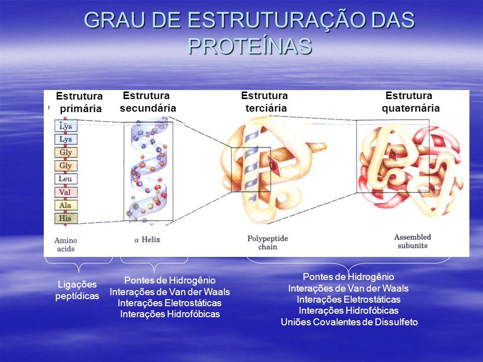GRAU DE ESTRUTURAÇÃO DAS PROTEÍNAS Ligações peptídicas Pontes de Hidrogênio Interações de Van der Waals Interações Eletrostáticas Interações Hidrofóbicas Uniões Covalentes de Dissulfeto Pontes de Hidrogênio Interações de Van der Waals Interações Eletrostáticas Interações Hidrofóbicas Estrutura primária Estrutura secundária Estrutura terciária Estrutura quaternária