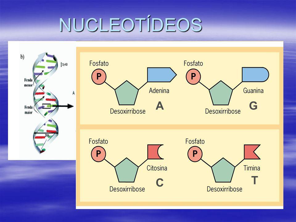 NUCLEOTÍDEOS AG C T