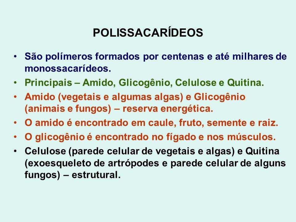 POLISSACARÍDEOS São polímeros formados por centenas e até milhares de monossacarídeos. Principais – Amido, Glicogênio, Celulose e Quitina. Amido (vege