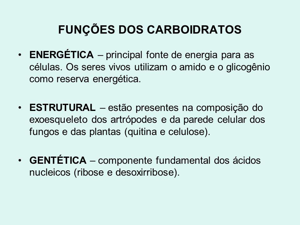 FUNÇÕES DOS CARBOIDRATOS ENERGÉTICA – principal fonte de energia para as células. Os seres vivos utilizam o amido e o glicogênio como reserva energéti