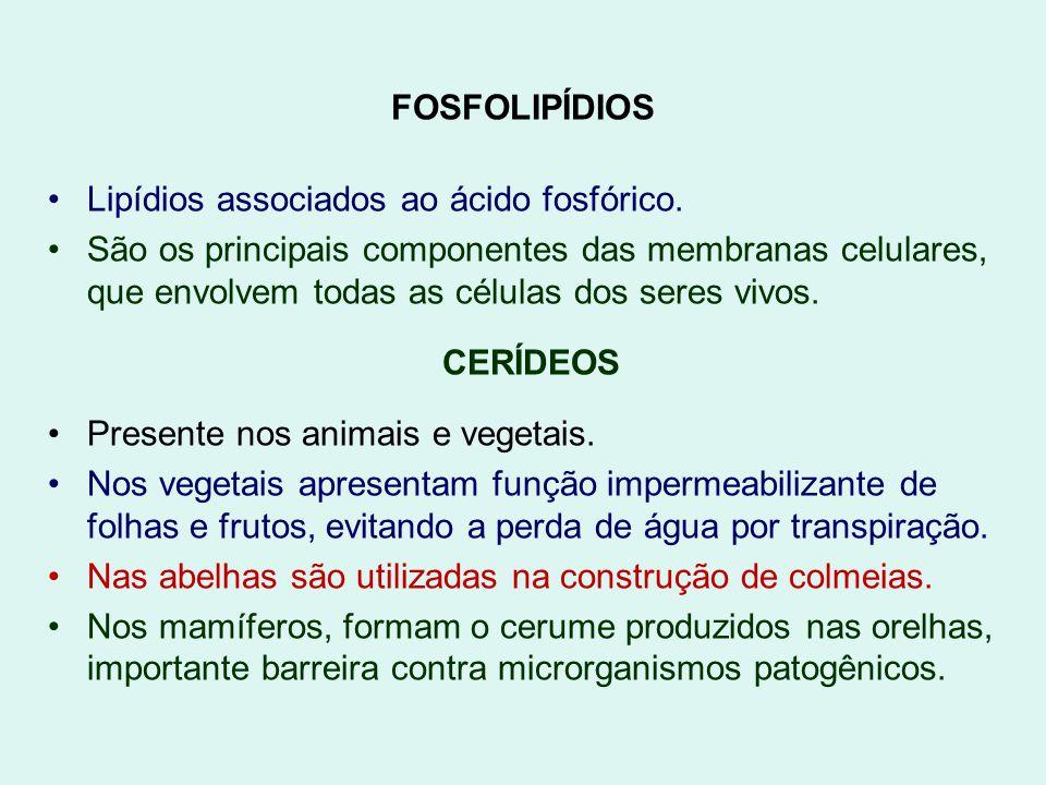 FOSFOLIPÍDIOS Lipídios associados ao ácido fosfórico. São os principais componentes das membranas celulares, que envolvem todas as células dos seres v