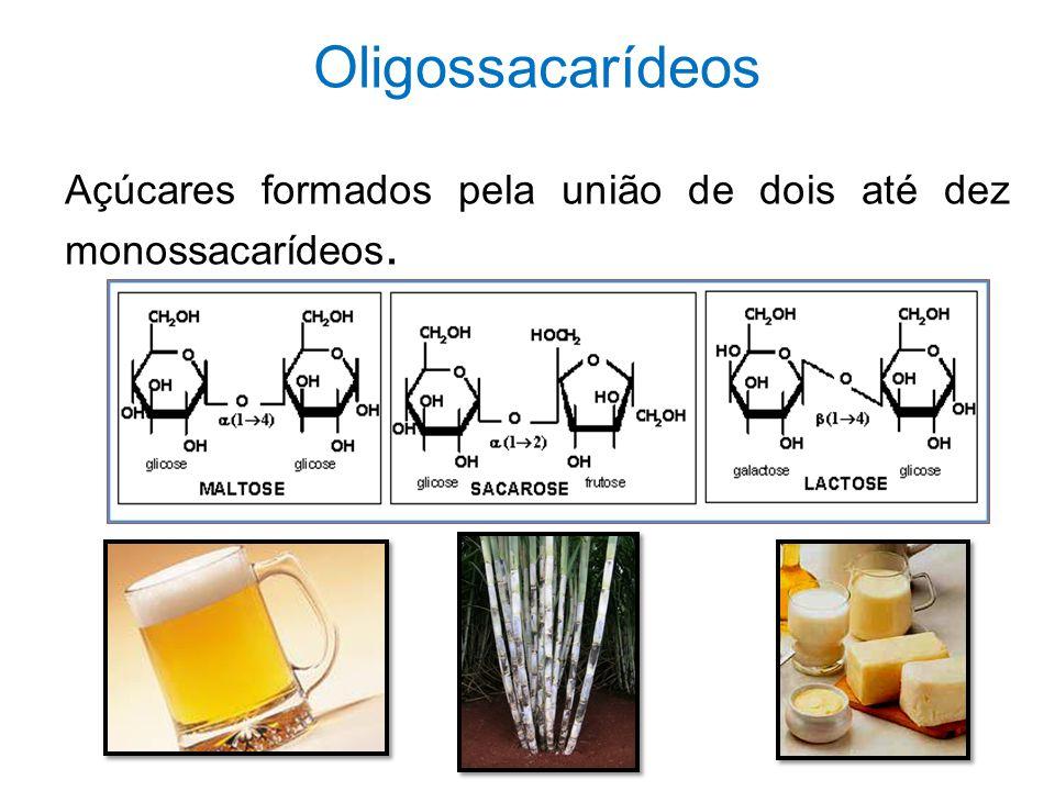 Oligossacarídeos Açúcares formados pela união de dois até dez monossacarídeos.