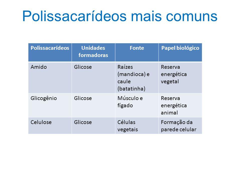 PolissacarídeosUnidades formadoras FontePapel biológico AmidoGlicoseRaízes (mandioca) e caule (batatinha) Reserva energética vegetal GlicogênioGlicose