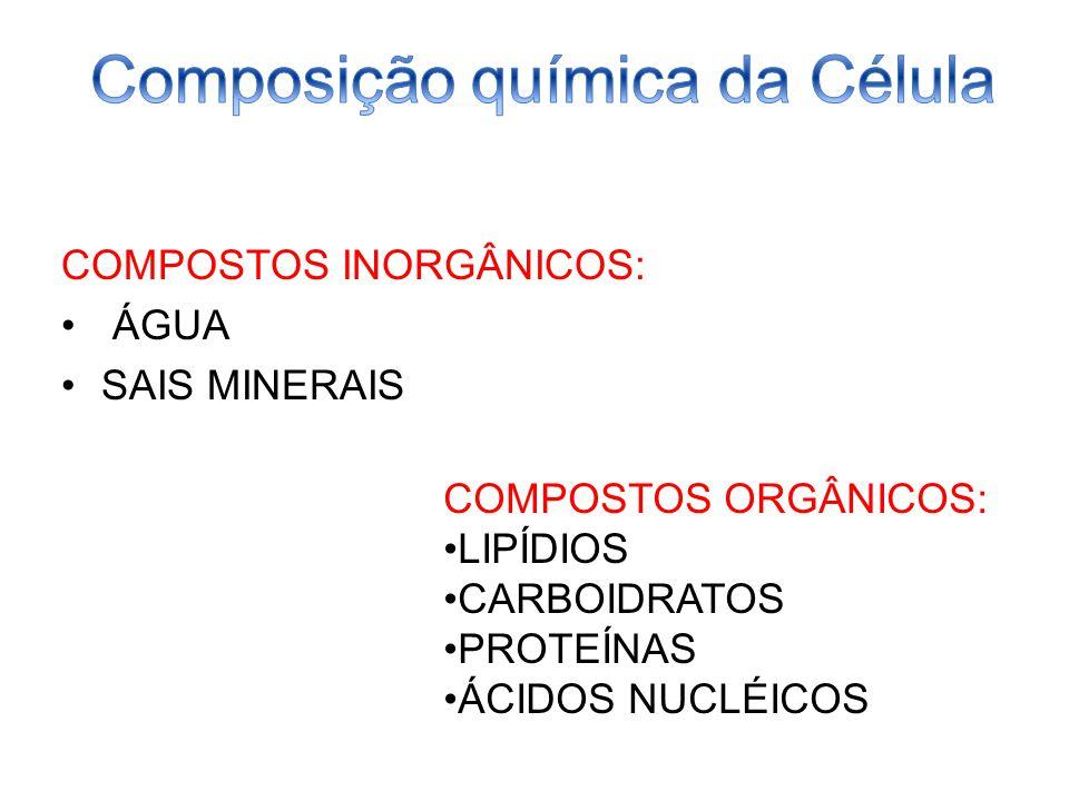 COMPOSTOS INORGÂNICOS: ÁGUA SAIS MINERAIS COMPOSTOS ORGÂNICOS: LIPÍDIOS CARBOIDRATOS PROTEÍNAS ÁCIDOS NUCLÉICOS