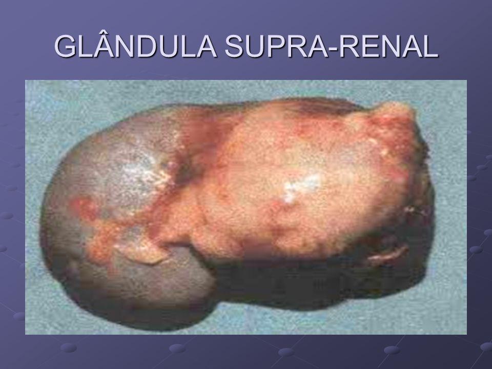 GLÂNDULA SUPRA-RENAL