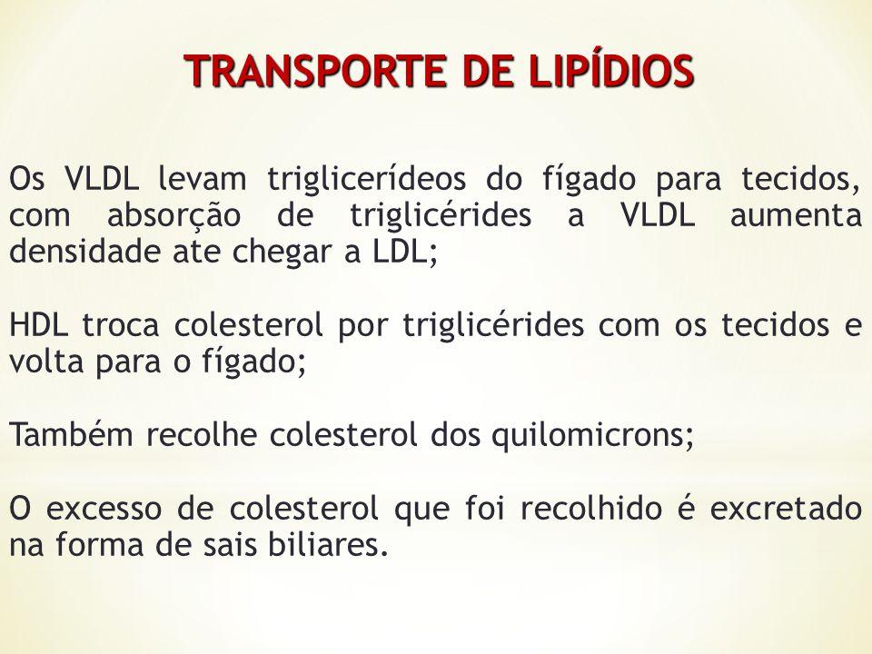 TRANSPORTE DE LIPÍDIOS Os VLDL levam triglicerídeos do fígado para tecidos, com absorção de triglicérides a VLDL aumenta densidade ate chegar a LDL; H