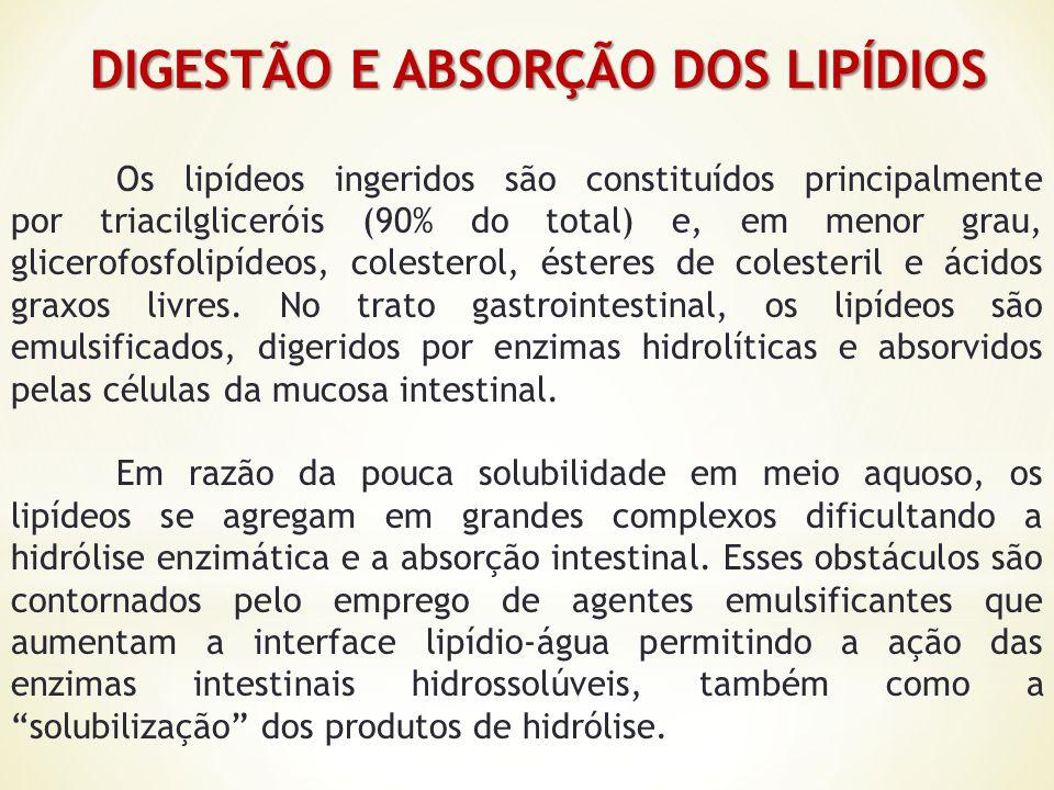 DIGESTÃO E ABSORÇÃO DOS LIPÍDIOS DIGESTÃO E ABSORÇÃO DOS LIPÍDIOS Os lipídeos ingeridos são constituídos principalmente por triacilgliceróis (90% do t