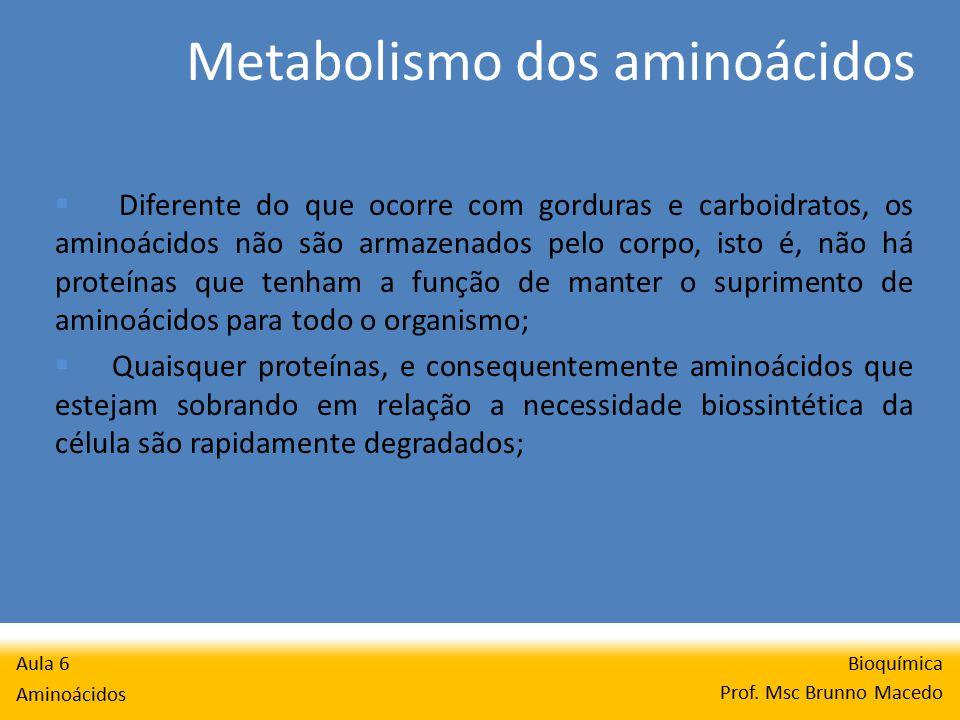 Metabolismo dos aminoácidos Bioquímica Prof.