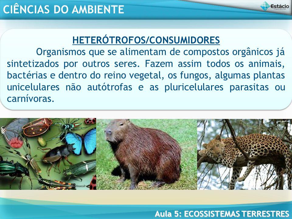 CIÊNCIAS DO AMBIENTE Aula 5: ECOSSISTEMAS TERRESTRES SAPRÓTROFOS/DECOMPOSITORES Organismo que se alimenta de restos orgânicos em decomposição, mais ou menos alterados.