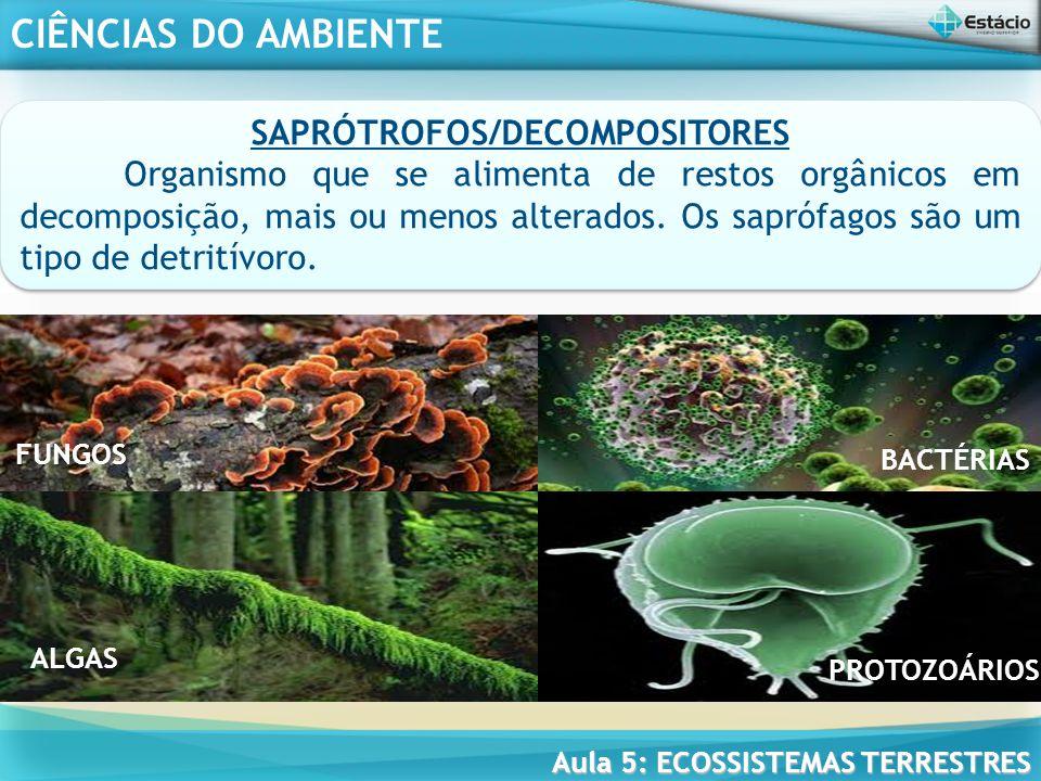 CIÊNCIAS DO AMBIENTE Aula 5: ECOSSISTEMAS TERRESTRES A ESTRUTURA TRÓFICA DOS ECOSSISTEMAS TERRESTRES energia percorre de forma unidirecional A transferência de energia, a partir da captação realizada pelos organismos que fazem fotossíntese, percorre de forma unidirecional uma cadeia formada por diversos níveis (compostas de seres vivos), mantida por essa energia - cadeia alimentar, constituindo uma estrutura trófica.