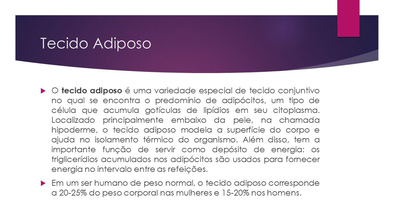 Tecido Adiposo  O tecido adiposo é uma variedade especial de tecido conjuntivo no qual se encontra o predomínio de adipócitos, um tipo de célula que