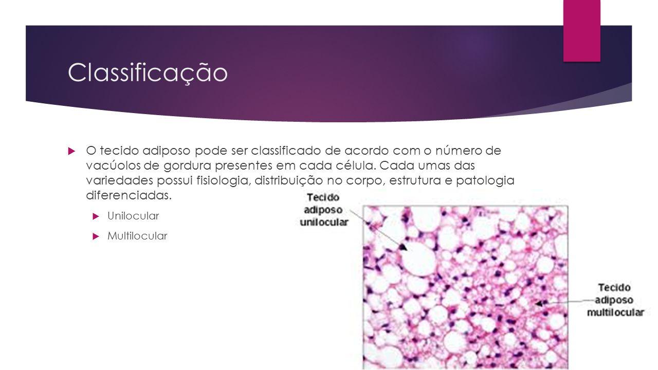 Unilocular  O tecido adiposo do tipo unilocular recebe esse nome pelo fato de suas células apresentarem uma gotícula de gordura predominante, que preenche quase todo o seu citoplasma.