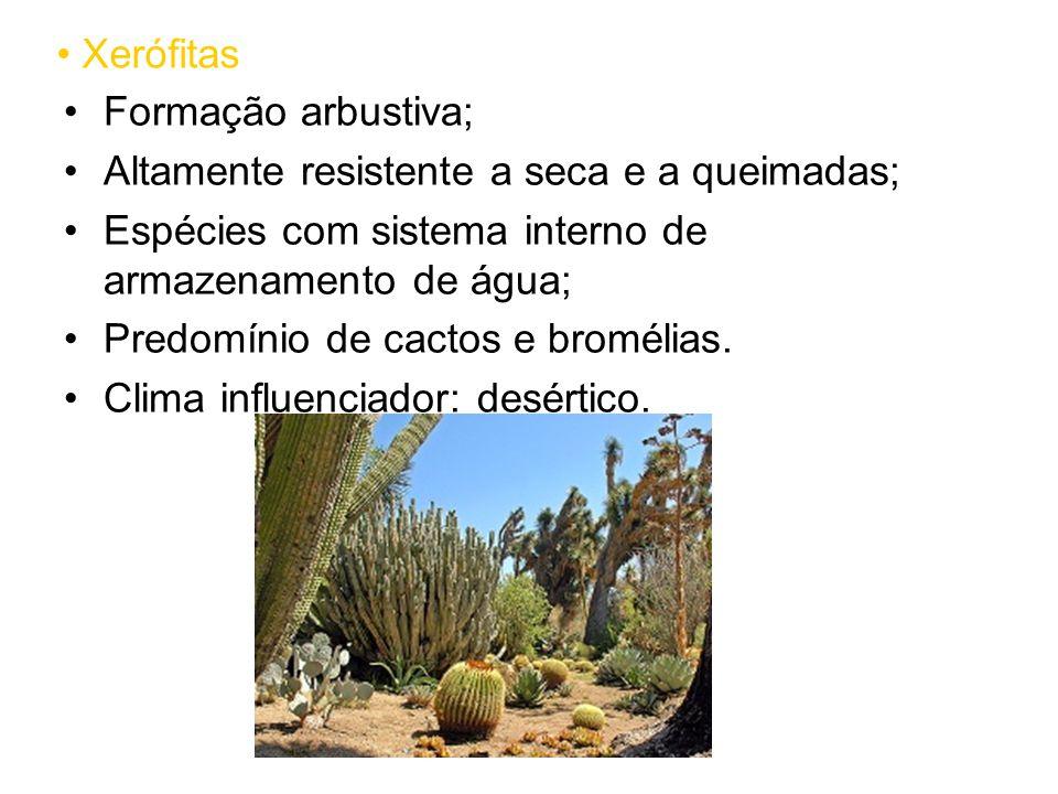 Xerófitas Formação arbustiva; Altamente resistente a seca e a queimadas; Espécies com sistema interno de armazenamento de água; Predomínio de cactos e bromélias.