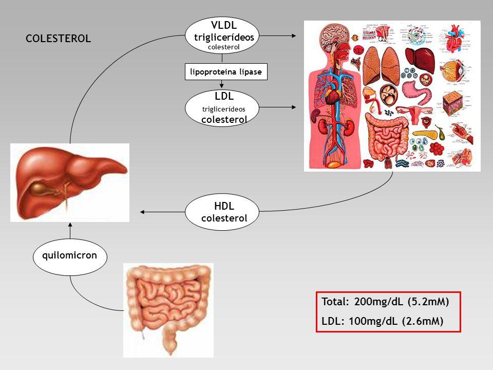 quilomicron VLDL triglicerídeos colesterol HDL colesterol LDL triglicerídeos colesterol lipoproteina lipase COLESTEROL Total: 200mg/dL (5.2mM) LDL: 10