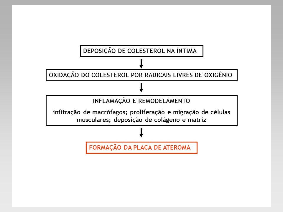 DEPOSIÇÃO DE COLESTEROL NA ÍNTIMA OXIDAÇÃO DO COLESTEROL POR RADICAIS LIVRES DE OXIGÊNIO INFLAMAÇÃO E REMODELAMENTO infitração de macrófagos; prolifer