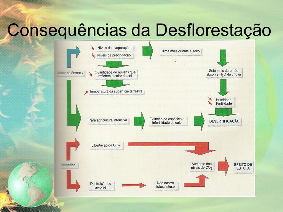 Consequências da Desflorestação