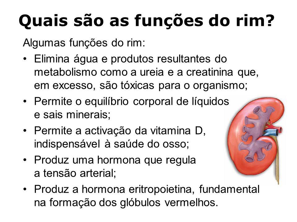 Quais são as funções do rim.
