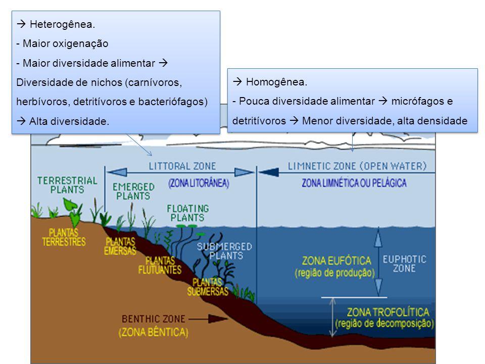  Heterogênea. - Maior oxigenação - Maior diversidade alimentar  Diversidade de nichos (carnívoros, herbívoros, detritívoros e bacteriófagos)  Alta