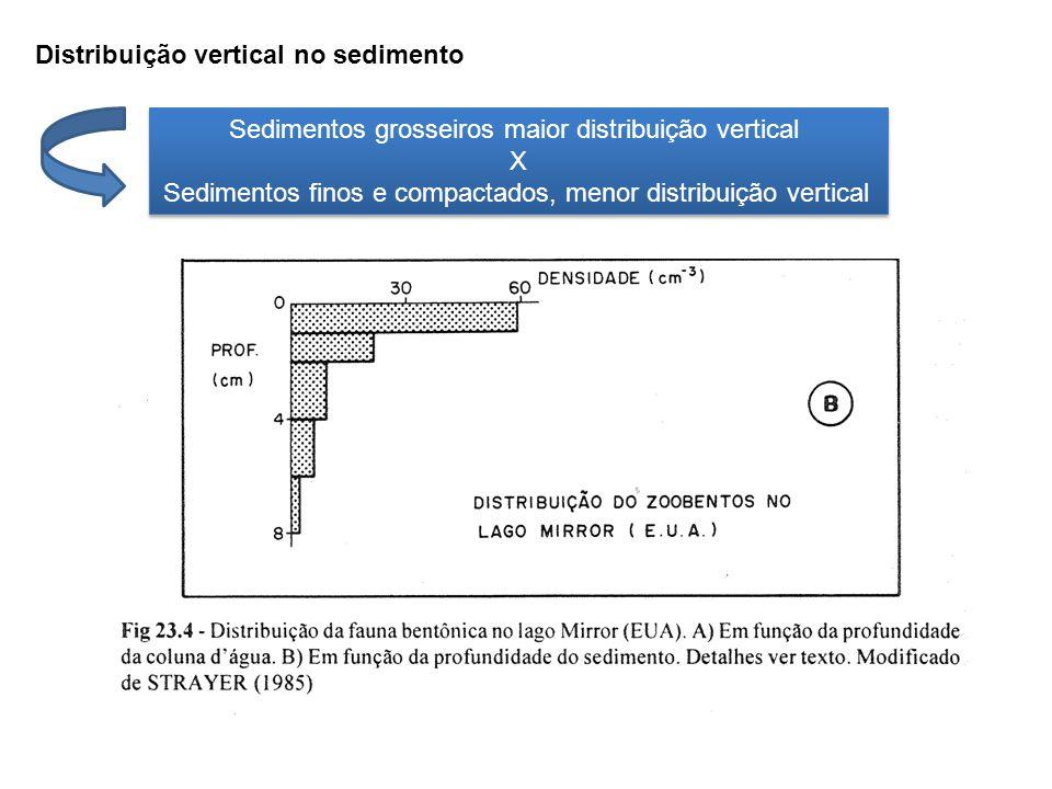 Sedimentos grosseiros maior distribuição vertical X Sedimentos finos e compactados, menor distribuição vertical Sedimentos grosseiros maior distribuiç