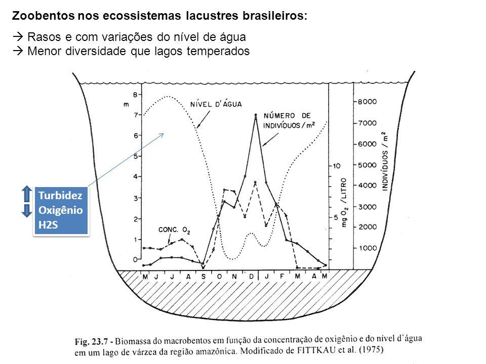 Zoobentos nos ecossistemas lacustres brasileiros:  Rasos e com variações do nível de água  Menor diversidade que lagos temperados Turbidez Oxigênio