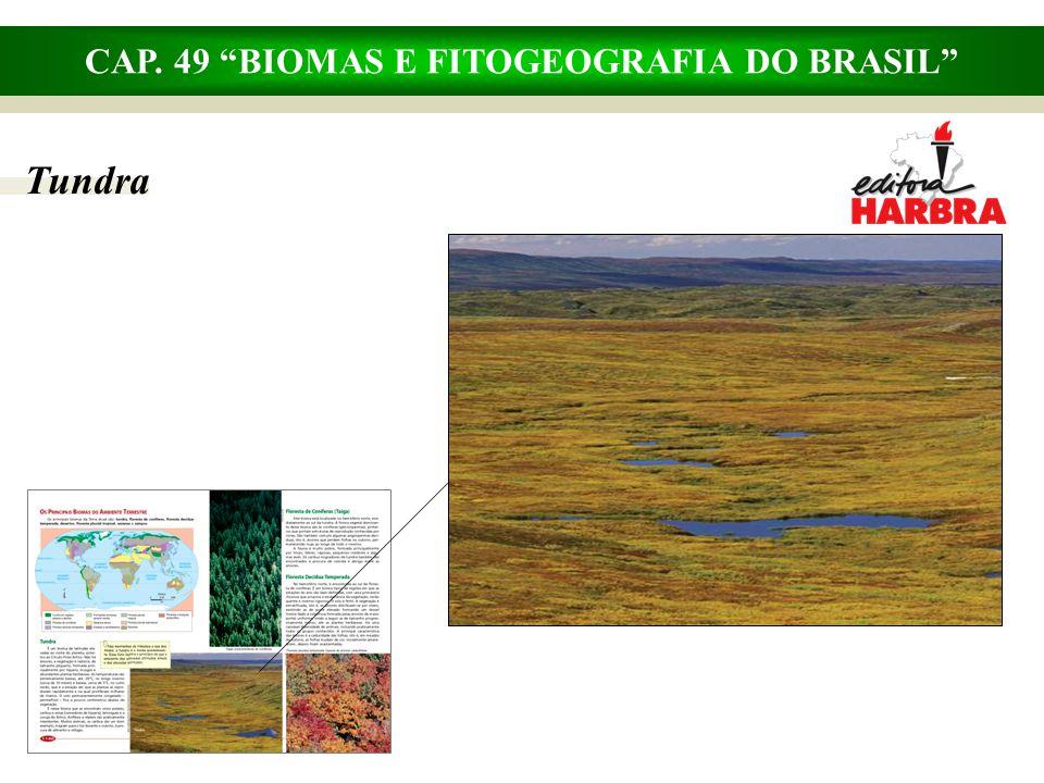 CAP. 49 BIOMAS E FITOGEOGRAFIA DO BRASIL Taiga – floresta de coníferas