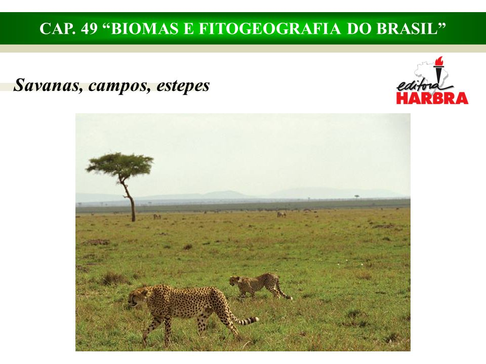 CAP. 49 BIOMAS E FITOGEOGRAFIA DO BRASIL Savanas, campos, estepes