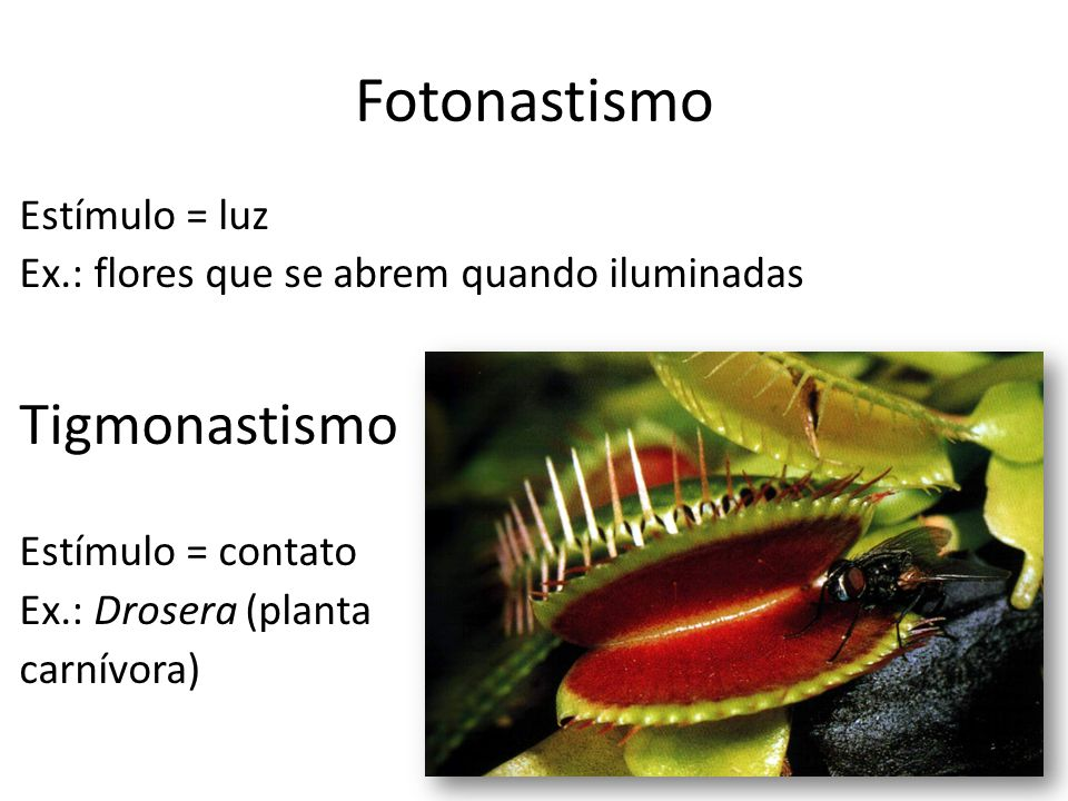 estimulo planta: