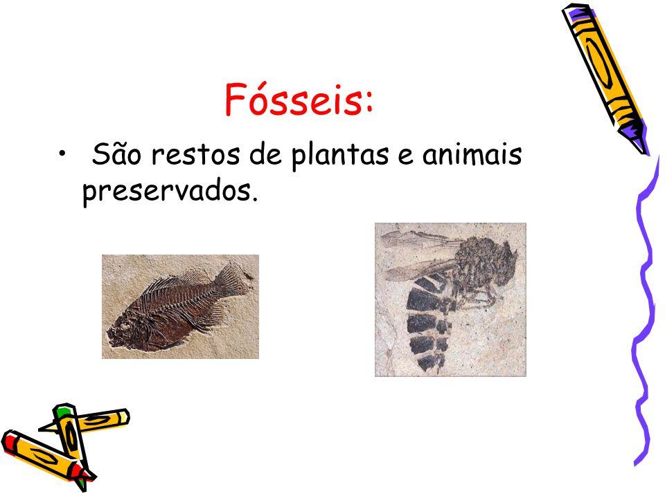Fósseis: São restos de plantas e animais preservados.