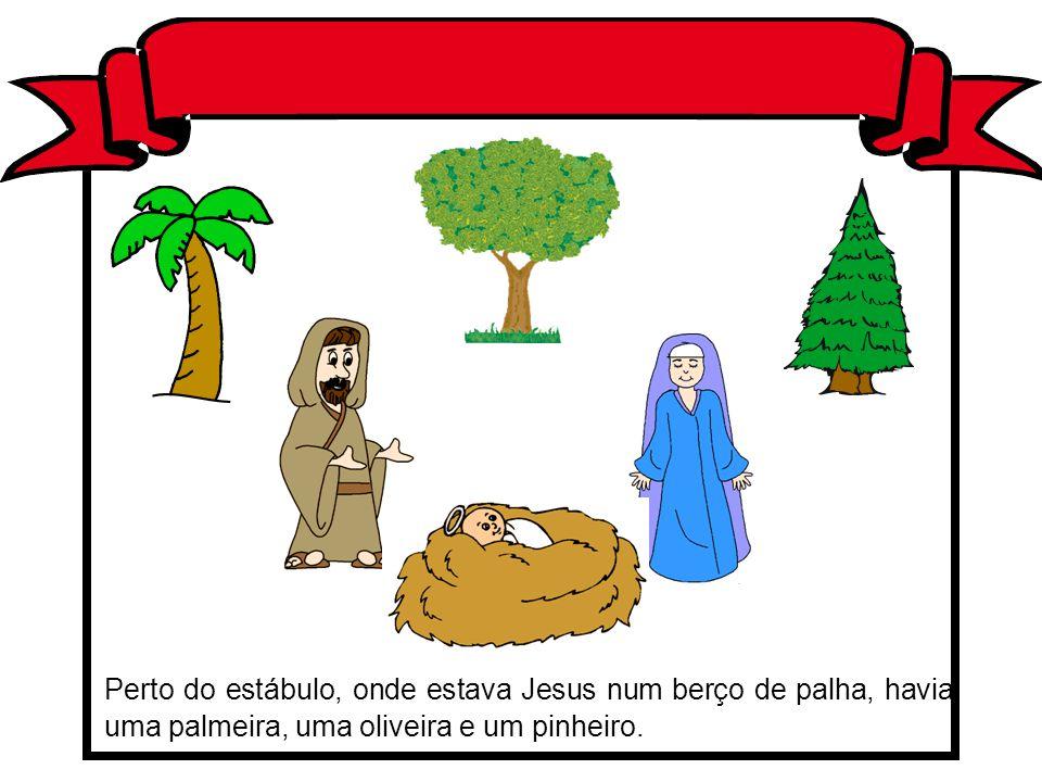 Perto do estábulo, onde estava Jesus num berço de palha, havia uma palmeira, uma oliveira e um pinheiro.