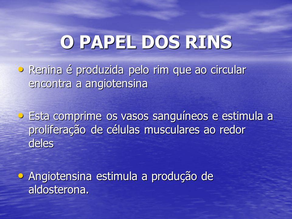 O PAPEL DOS RINS Renina é produzida pelo rim que ao circular encontra a angiotensina Renina é produzida pelo rim que ao circular encontra a angiotensi