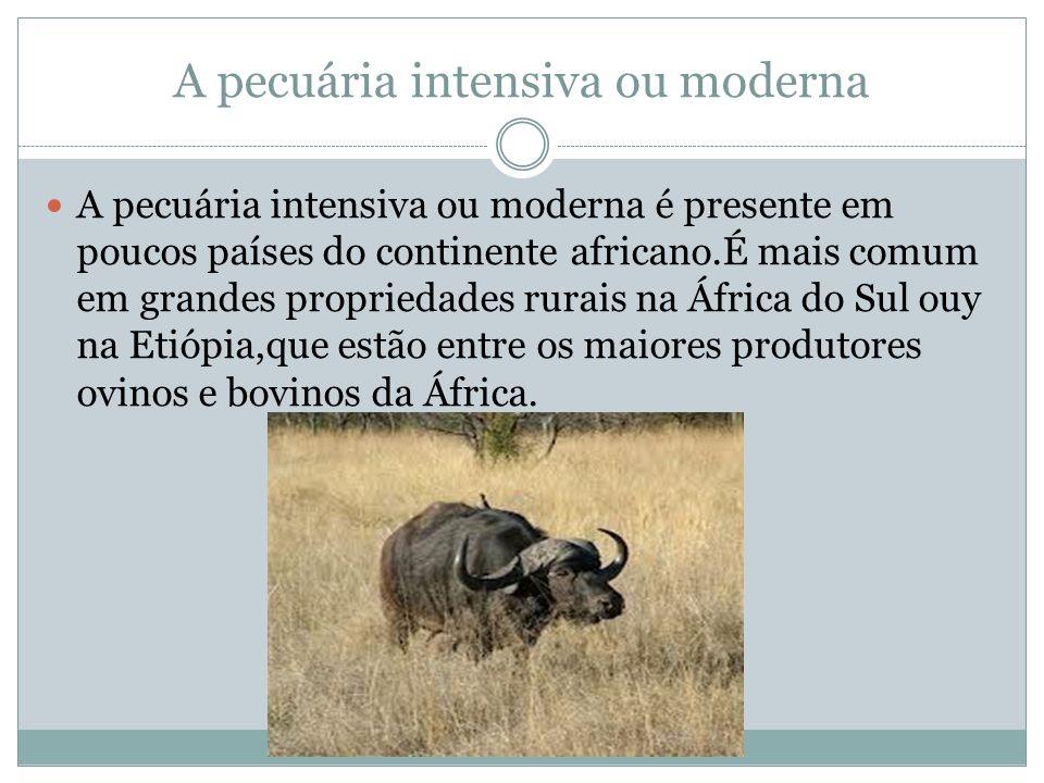 A pecuária intensiva ou moderna A pecuária intensiva ou moderna é presente em poucos países do continente africano.É mais comum em grandes propriedades rurais na África do Sul ouy na Etiópia,que estão entre os maiores produtores ovinos e bovinos da África.