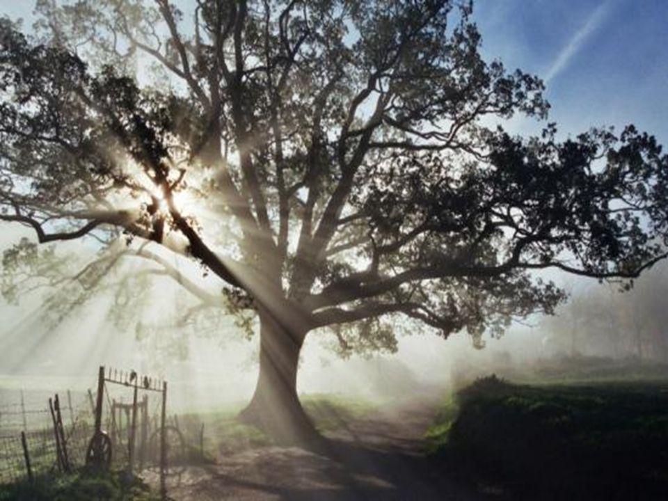 Risultati immagini per Gli alberi parlano...