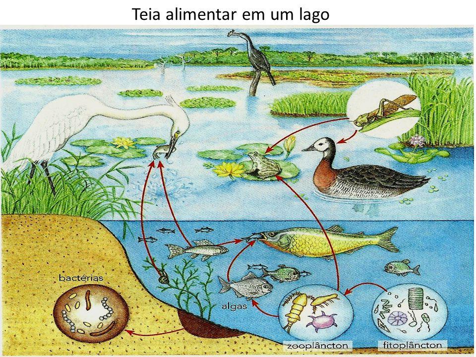 Teia alimentar em um lago