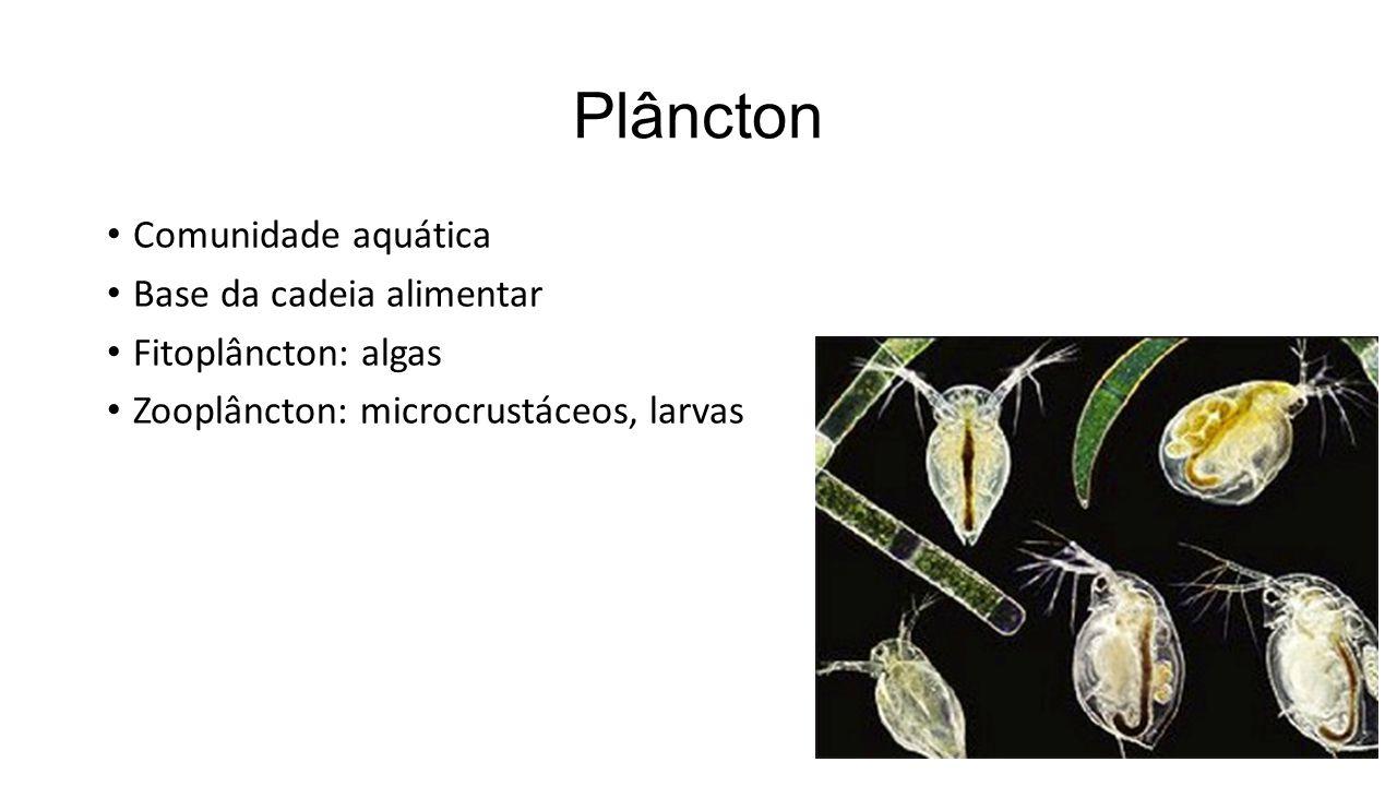 Plâncton Comunidade aquática Base da cadeia alimentar Fitoplâncton: algas Zooplâncton: microcrustáceos, larvas