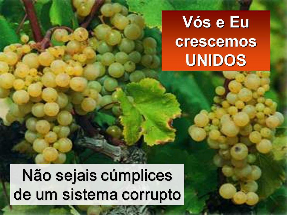 Não sejais cúmplices de um sistema corrupto Vós e Eu crescemos UNIDOS