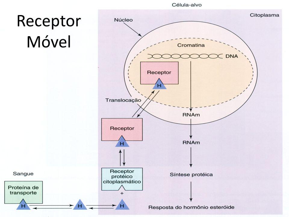 Receptor Móvel