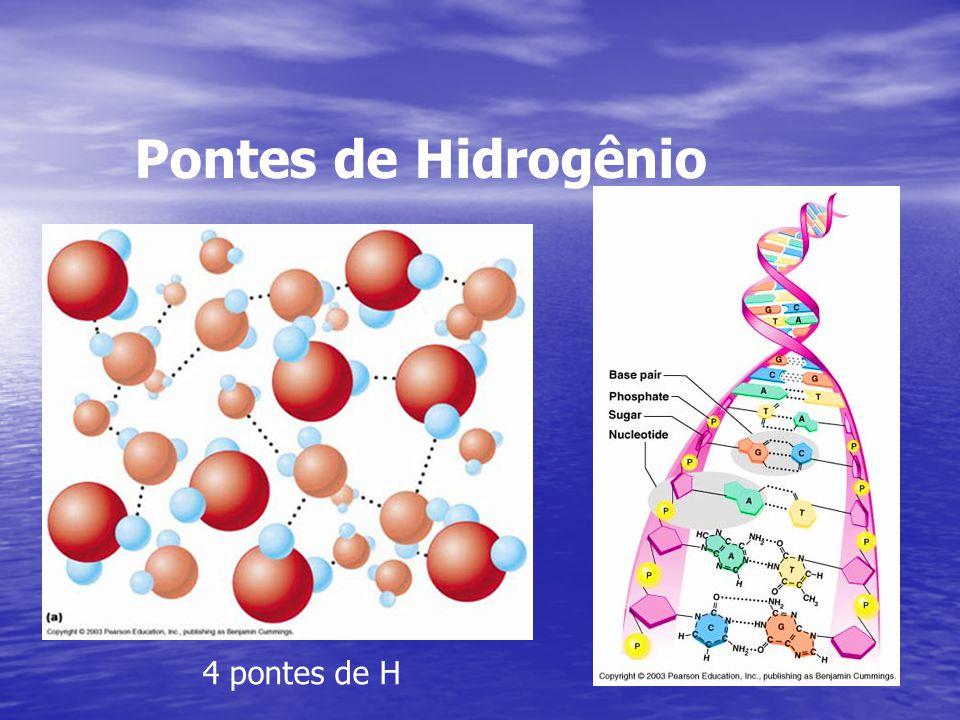 Pontes de Hidrogênio 4 pontes de H