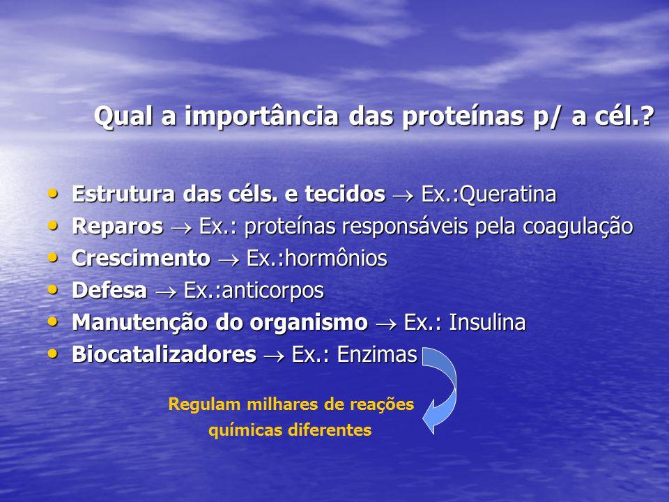 Qual a importância das proteínas p/ a cél.? Estrutura das céls. e tecidos  Ex.:Queratina Estrutura das céls. e tecidos  Ex.:Queratina Reparos  Ex.: