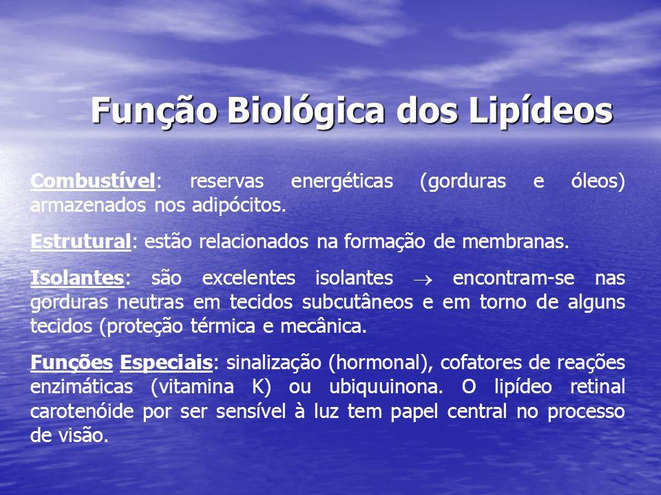 Função Biológica dos Lipídeos Combustível: reservas energéticas (gorduras e óleos) armazenados nos adipócitos. Estrutural: estão relacionados na forma