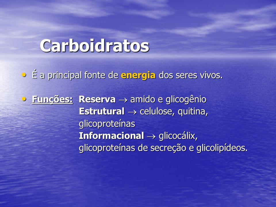 Carboidratos É a principal fonte de energia dos seres vivos. É a principal fonte de energia dos seres vivos. Funções: Reserva  amido e glicogênio Fun