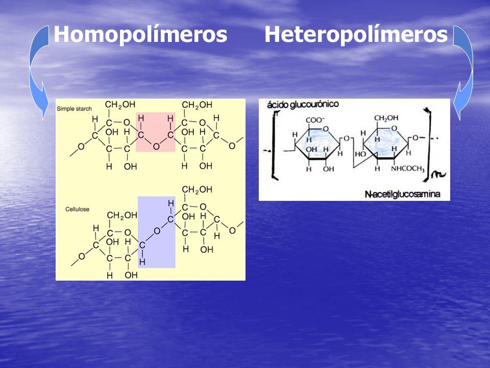Homopolímeros Heteropolímeros