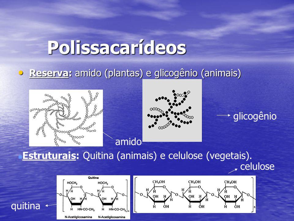 Polissacarídeos Reserva: amido (plantas) e glicogênio (animais) Reserva: amido (plantas) e glicogênio (animais) Estruturais: Quitina (animais) e celul