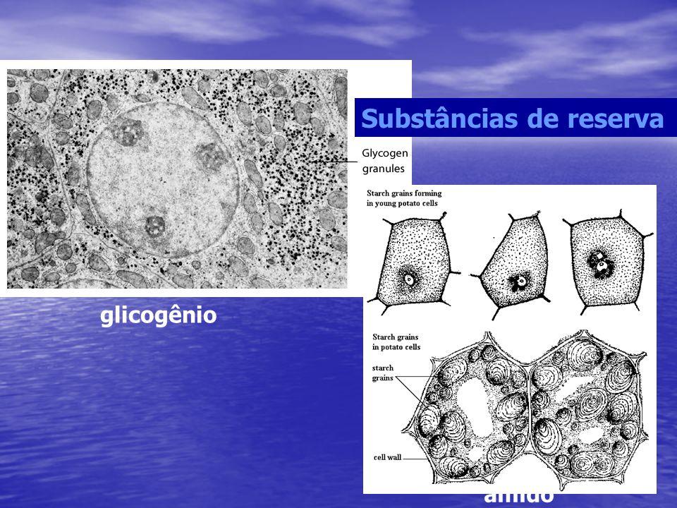 Substâncias de reserva glicogênio amido